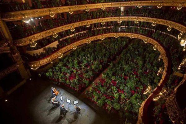 Համերգ բույսերի համար՝ Բարսելոնայի օպերային թատրոնում