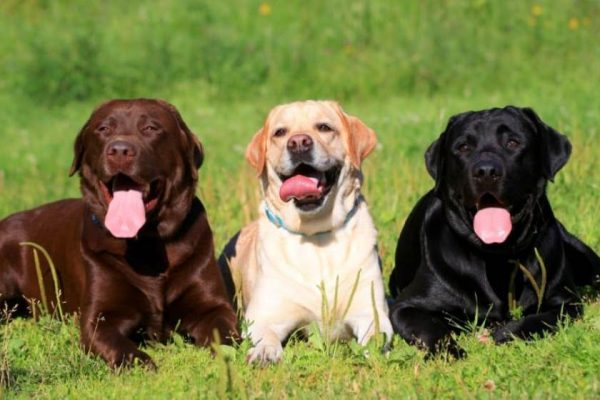 Արհեստական բանականությամբ հնարավոր կլինի հասկանալ շներին